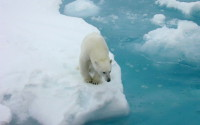 Добыча нефти в Арктике может начаться лишь через 15 лет